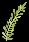 plantas-07