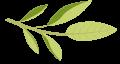 plantas-08